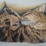 Cat Nap colour pencil drawing on watercolour paper by kate Rosten