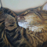 Cat Nap oil pet portrait painting by Kate Rosten