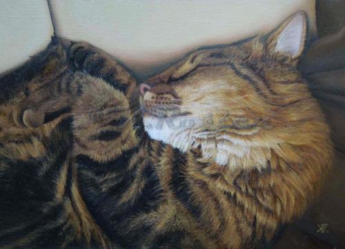 Cat Nap oil pet portrait painting by Kate Rosten