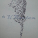 Cat cleaning, pen drawing for greeting card K Rosten