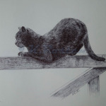 Cat on a gate, pen drawing greeting card design Kate Rosten