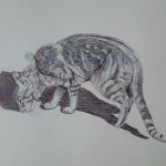 Cat pen drawing, pet portrait artist K Rosten