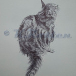 Cat scratch pen drawing greeting card design Kate Rosten