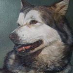 Huski. pet portrait oil painting. Kate Rosten