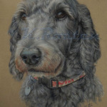 Beautiful Labradoodle Pastel Pet Portrait Kate Rosten Artist
