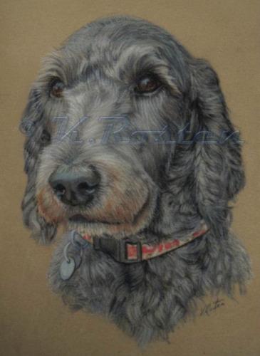 Beautiful Labradoodle Pastel Pet Portrait Kate Rosten Artist