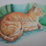 eric - colour pencil on watercolour paper, pet portrait KR