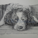 luke - pen pet portrait artist, illustration